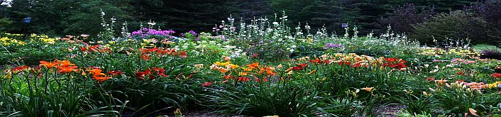 daylily display garden
